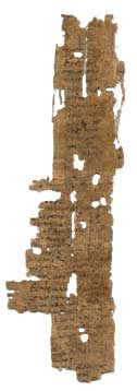 photo of papyrus