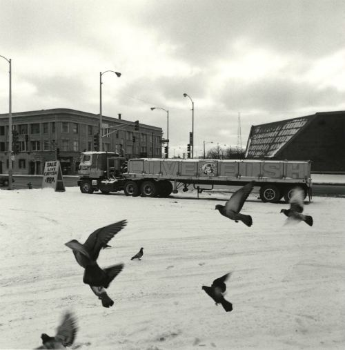 Parking lot for a fish store on Chicago's Southside. Regular deliveries of live fish come from Mississippi and other states, winter, 1994.