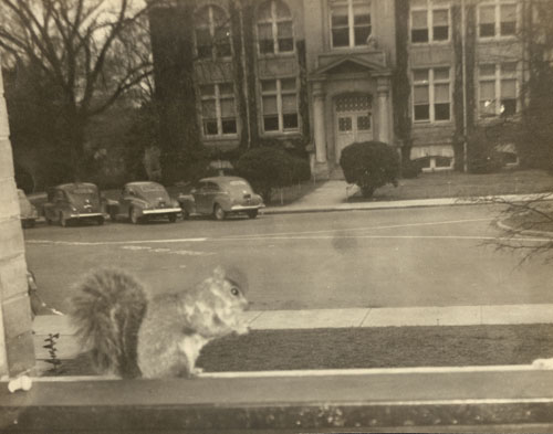 Pee Wee the Squirrel Visits the East Duke Building