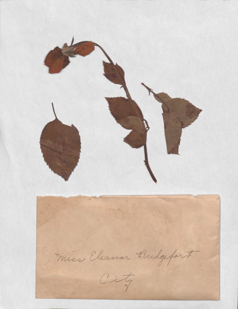 Dried rose with correspondence, Asa Spaulding to Elna Bridgeforth, circa December 1931.  Asa and Elna Spaulding Papers, Box EC-4, Folder 3:  esgms04003022