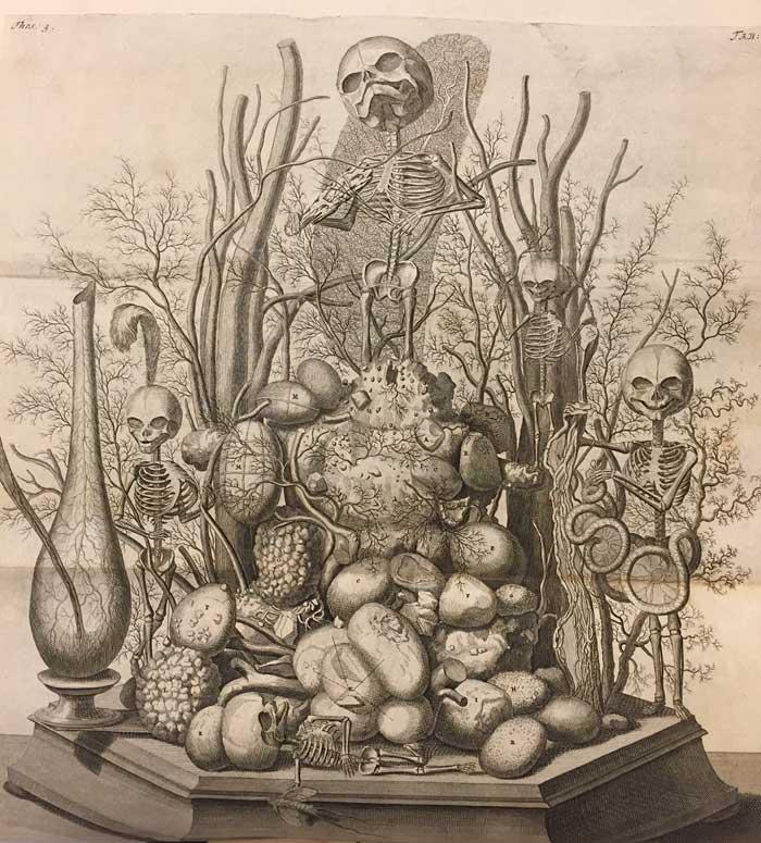 Illustration from Opera Omnia Anatomico-Medico-Chirurgica, ca. 1737.
