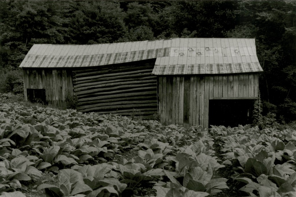 Tillman Chandler's barn and tobacco crop, 1975. Copyright, Rob Amberg