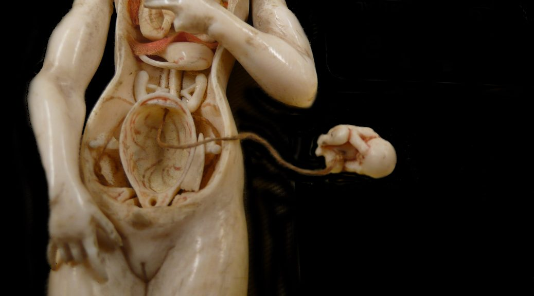 Lecture The History And Legacy Of Ivory Anatomical Manikins The