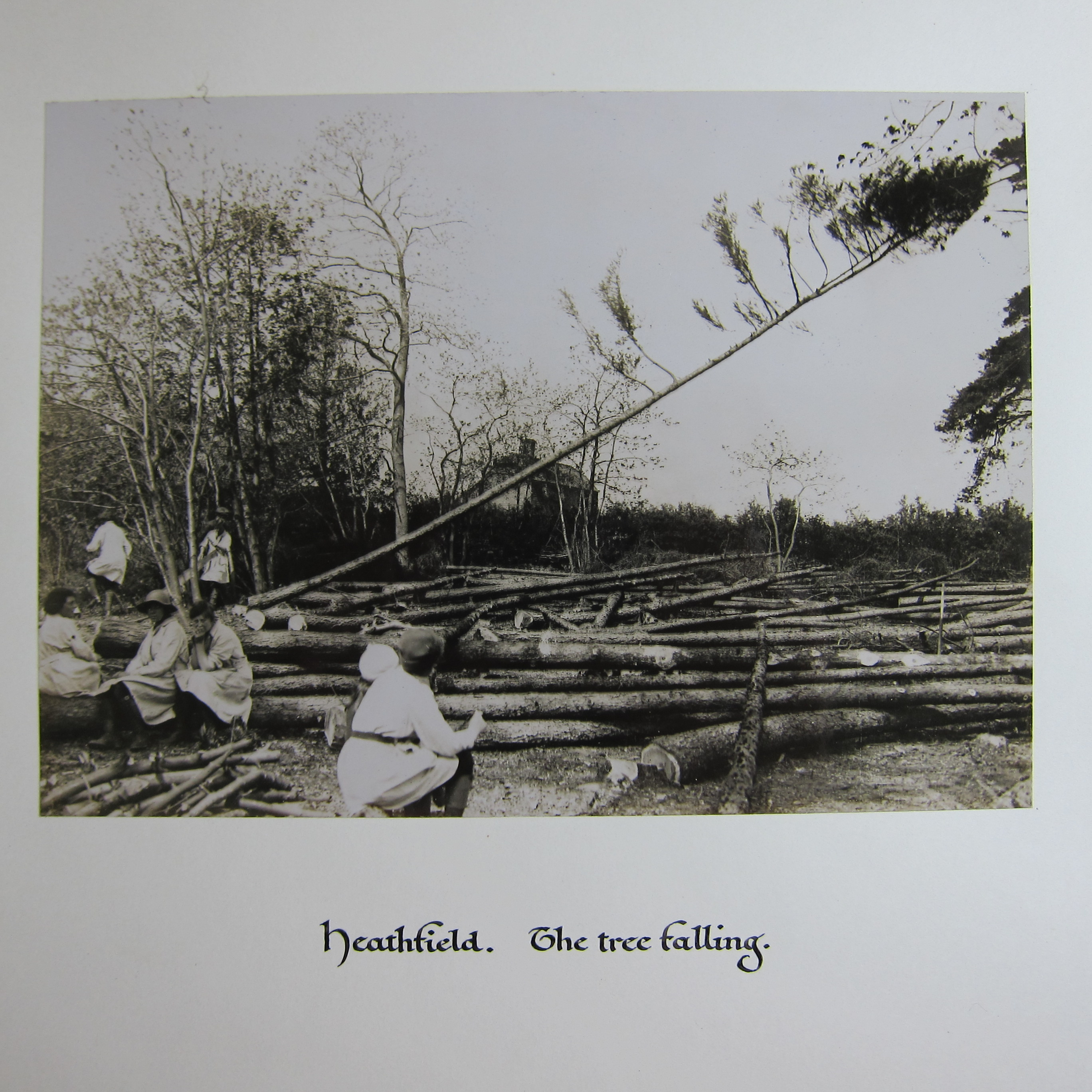 Photograph of tree falling and women fellers.
