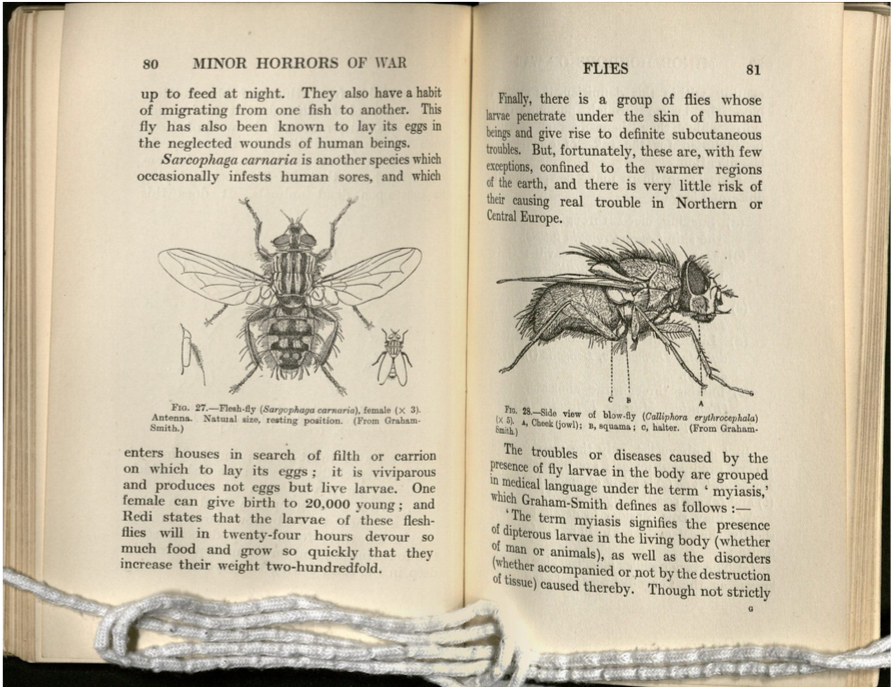 Left page shows an overhead view of a fly, the right page a side view of the fly
