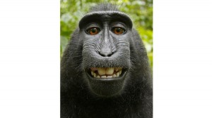 la-fg-british-photographer-monkey-selfie-20140-001