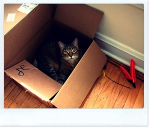cat in a cardboard moving box