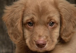 Sad-Puppy-puppies-9726248-1600-1200x