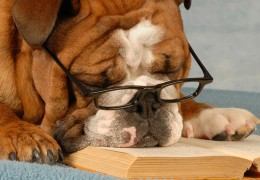 Tired of hitting the books? Looks like somebody needs a puppy break!