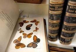 meghan-butterflies