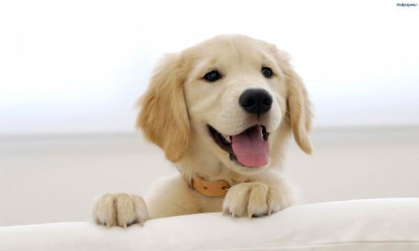 cute_puppy-1920x1200