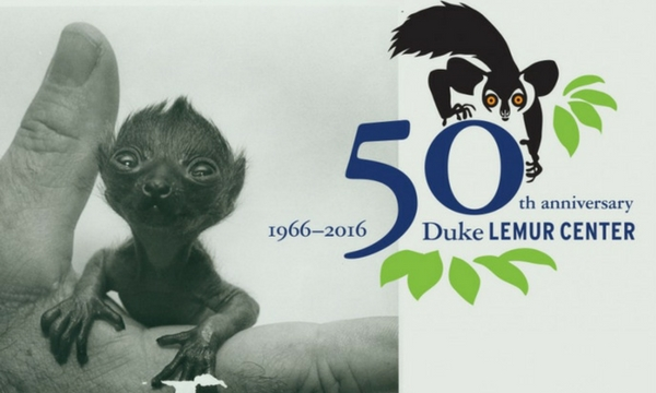 50th lemur center