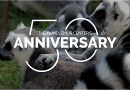 50th lemurs