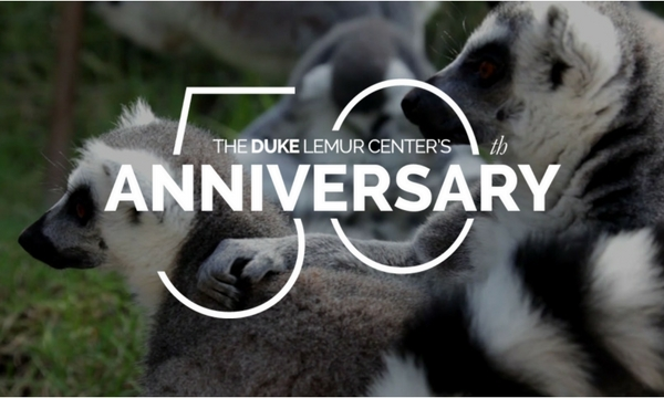50th lemurs